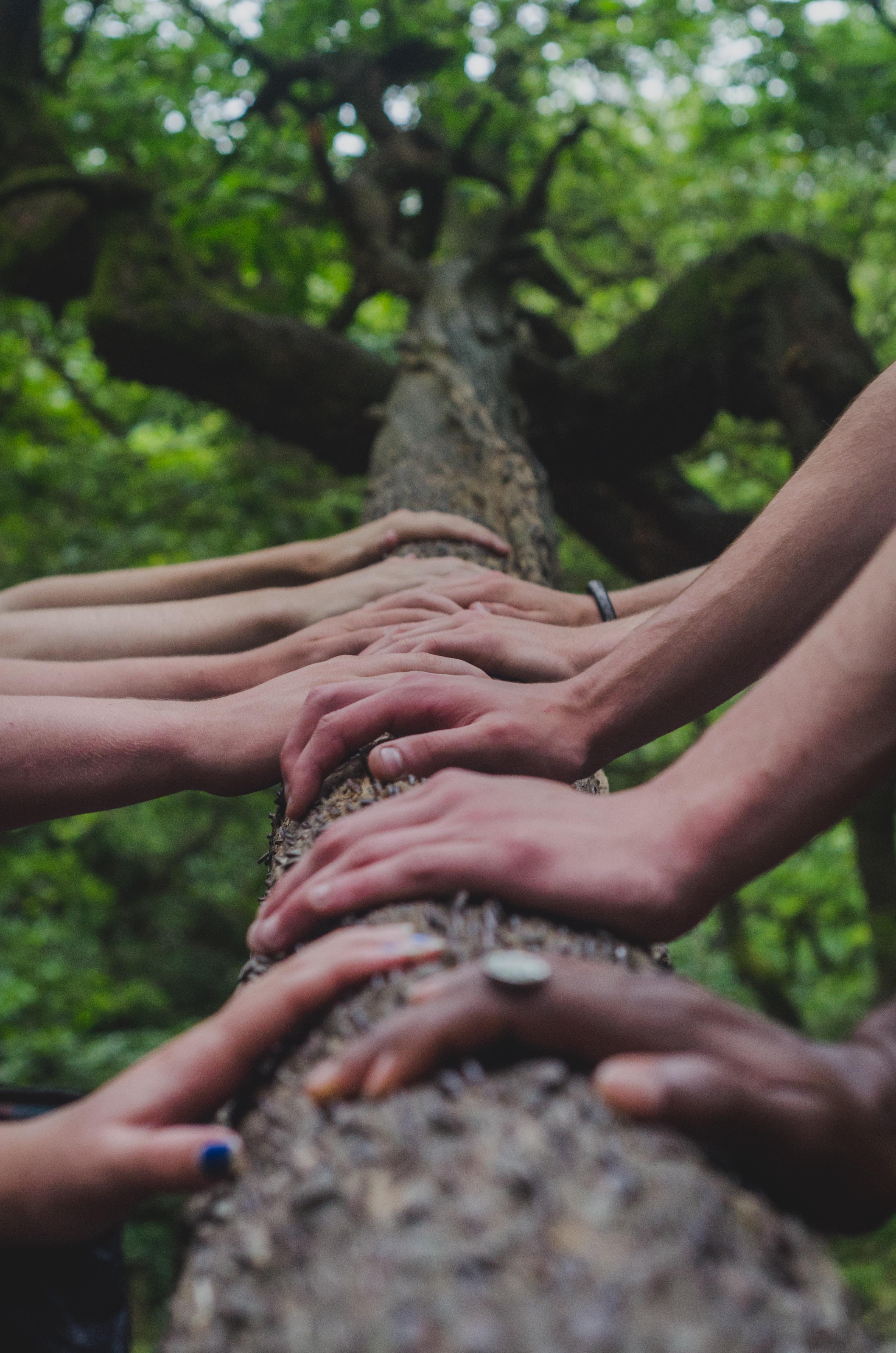 Terapia w grupie i poprzez grupę